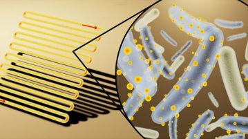 Bactérias ciborgues são cobertas de painéis solares minúsculos