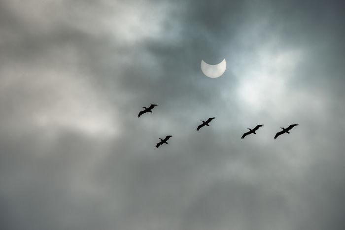 eclipse solar 12