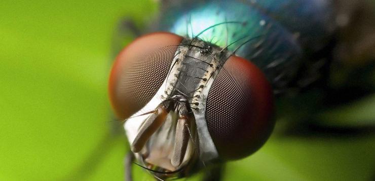Descubra porque é tão difícil  conseguir matar as moscas