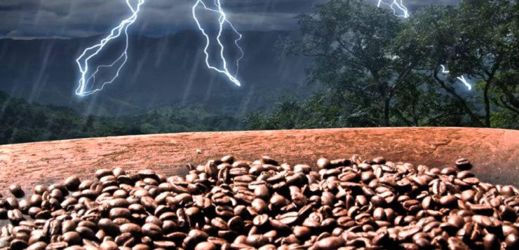 Mudanças climáticas podem causar futura escassez de café