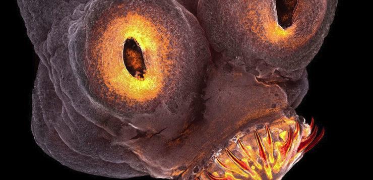 Artistas produzem fotos inacreditáveis usando microscópios