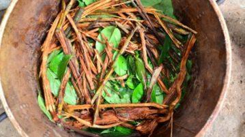 Preparação do chá de ayahuasca, mistura alucinógena de plantas da Amazônia que contém a substância psicodélica dimetiltriptamina (DMT) (Foto: Idor / Stevens Rehen)
