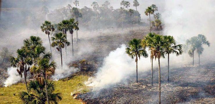 incêndio parque chapada dos veadeiros