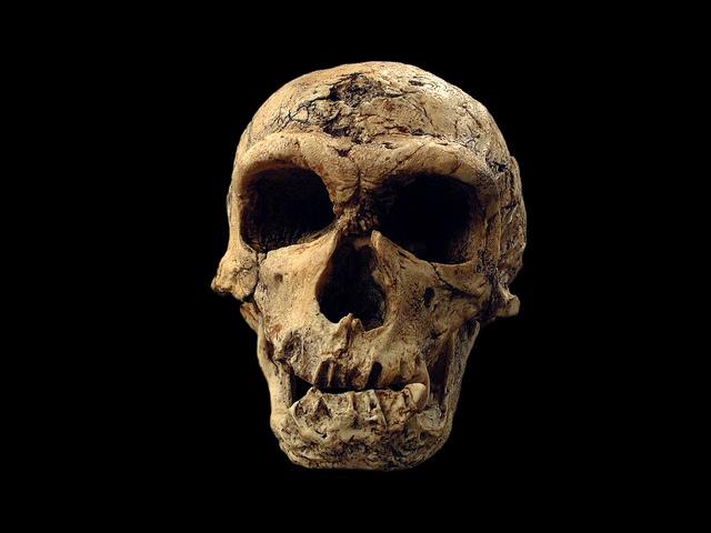 crânio de um neandertal