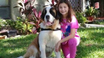 AN garotinha cega cão interna