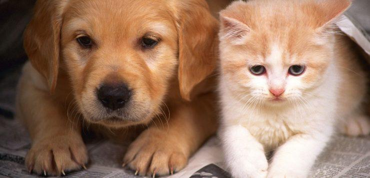 cães gatos