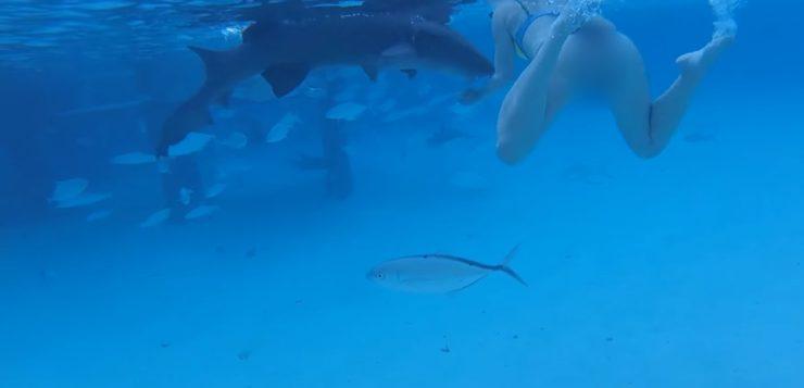 mulher ataque tubarão