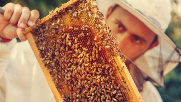 animais-abelhas
