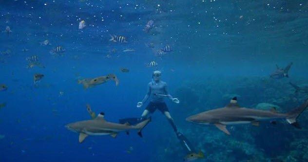 animais-tubarões