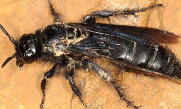 insetos-capa