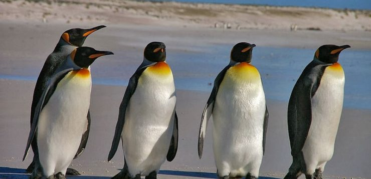 Fezes de pinguins na Antártida têm 'gás do riso' e afeta pesquisadores