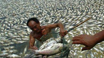 zonas mortas peixes