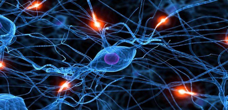 conexão cerebral