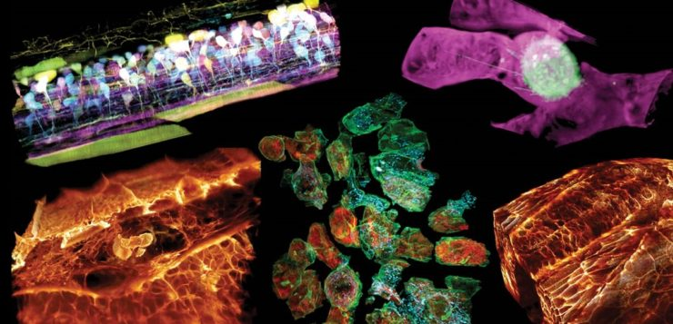 AN células vivas 3D 00