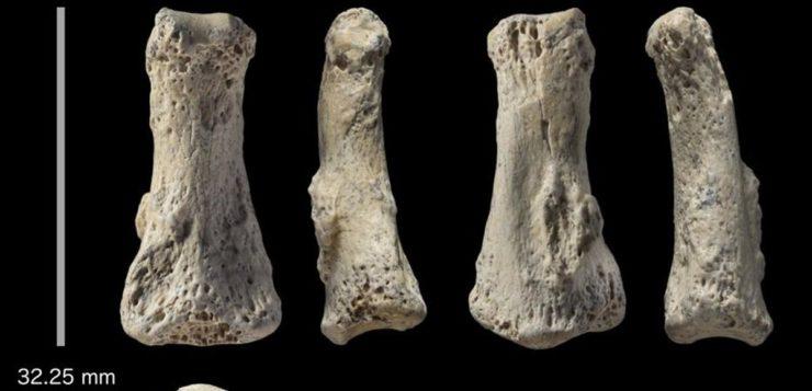 Dedo fossilizado revela que Homo sapiens saiu da África antes do que se pensava