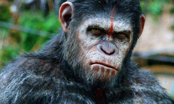 guerra chimpanzés