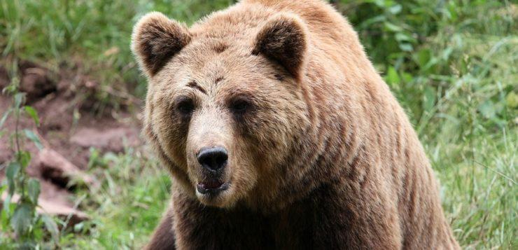 AN urso