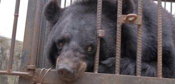 Família chinesa cria urso por 2 anos achando que era cachorro