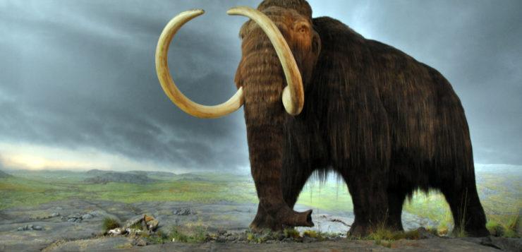 animais extintos mamute