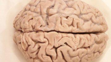 cérebro-capa