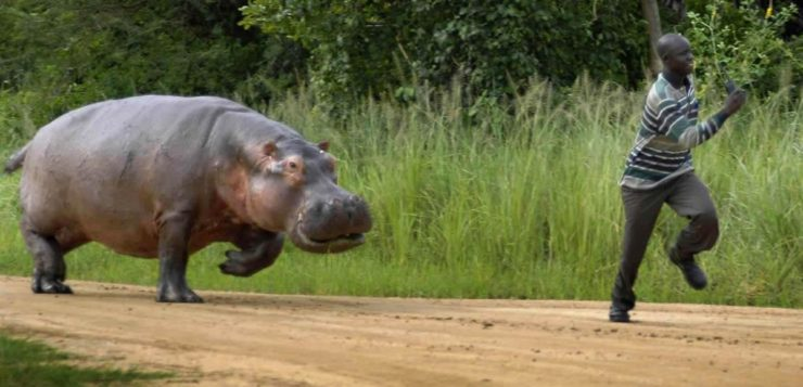 Colômbia tenta resolver problema com os hipopótamos de Pablo Escobar