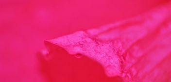 Cientistas descobrem qual é a cor mais antiga encontrada na natureza