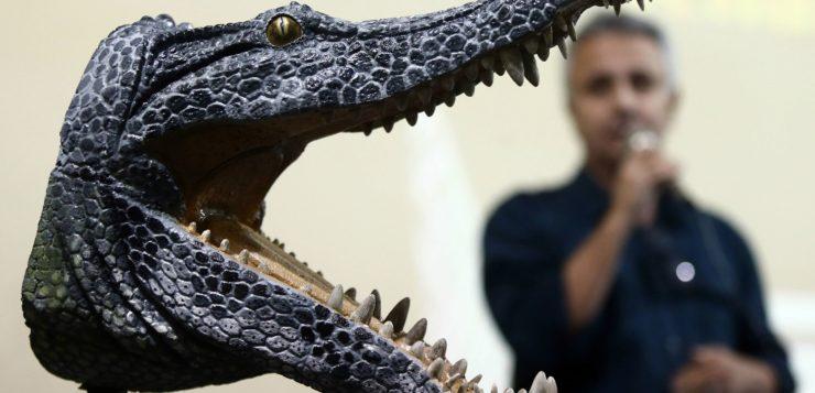 AN crocodilo são paulo