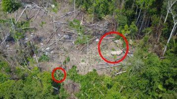 AN tribo indios indigena isolada amazonia