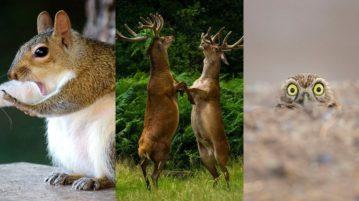 AN fotos de animais curiosas engracadas