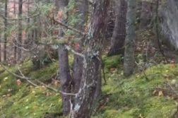 floresta respirando terra viva