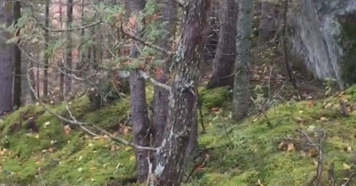 Tem Na Web - Terra viva? Vídeo feito no Canadá mostra floresta respirando; assista