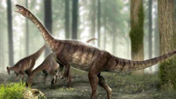 dinossauro pescoçudo