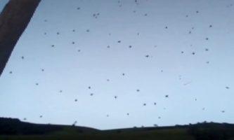 chuva de aranhas