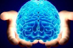 AN cerebro memoria
