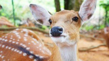 doença-cervo zumbi capa