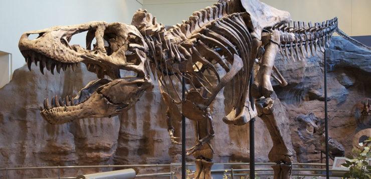 Dinossauros com penas: como a galinha pode ser descendente do T-Rex?