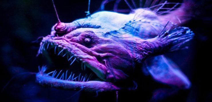 Por que os peixes abissais, do fundo do mar, são tão assustadores