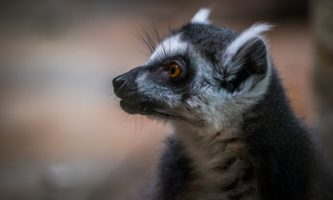 AN animais extincao fauna