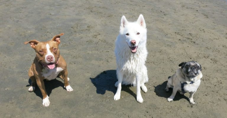 Aprenda a calcular a verdadeira idade 'humana' do seu cachorro