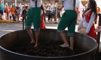vinho pisar uva