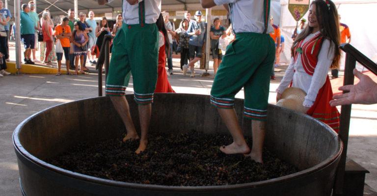 Por que as pessoas ainda pisam em uvas para produzir vinho?