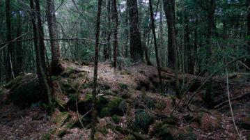 aokigahara floresta dos suicidas