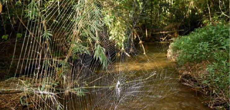 teia de aranha mais forte do mundo
