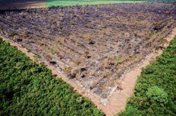 floresta amazonica desaparecer