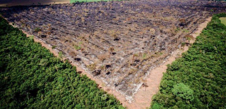 O que aconteceria se a Floresta Amazônica fosse destruída?