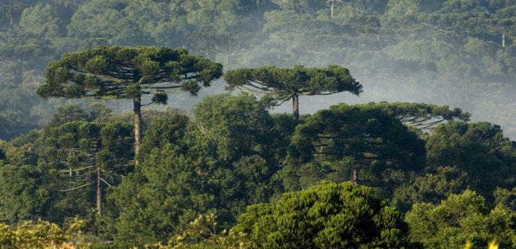 floresta árvores
