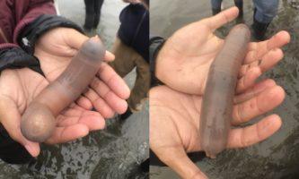 peixe-pênis