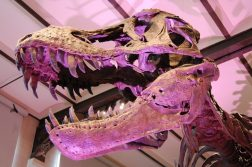dinossauro-t rex capa