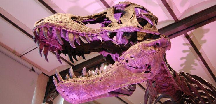Homem é preso após invadir museu e tirar selfie com crânio de dinossauro