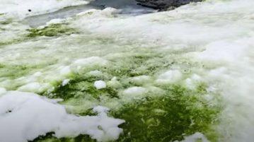 neve verde antártida